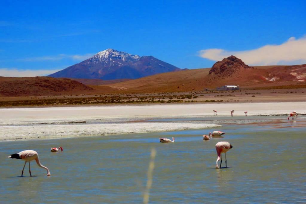flamingo lake Uyuni Salt Flat, Train Cemetery, Salt Museum, Galaxy Cave, Volcanoes, and Multi-Colored Lagoons.