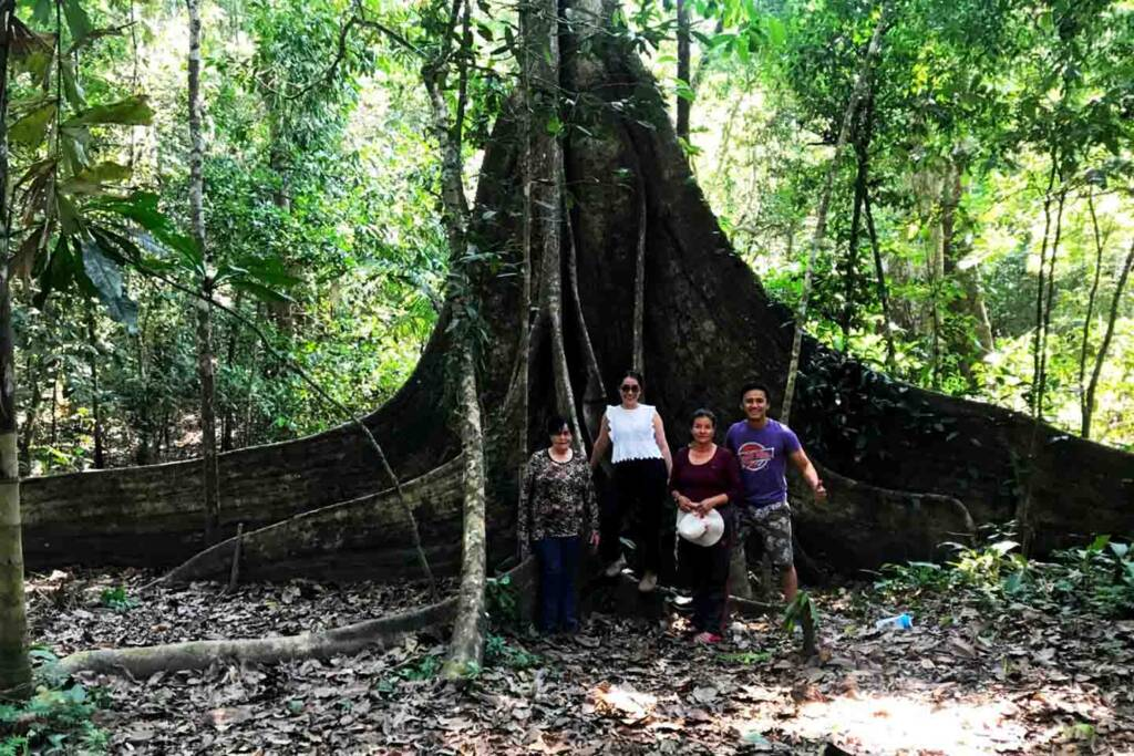 big trees in the amazon