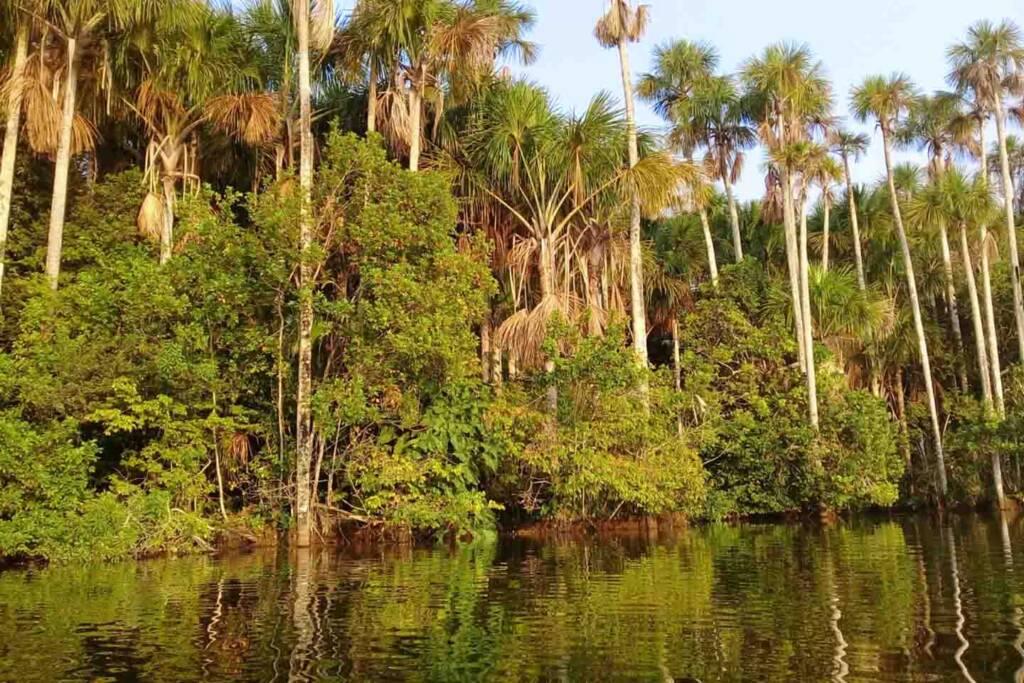 lake sandoval in Puerto Maldonado Amazon