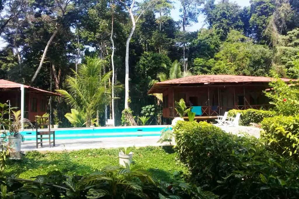 swimmming pool amazon jungle peru