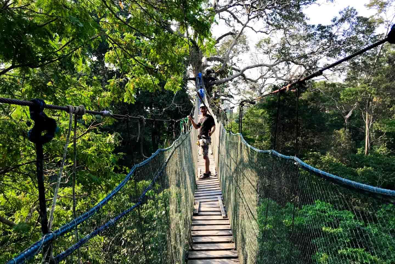 Zipline suspention bridge